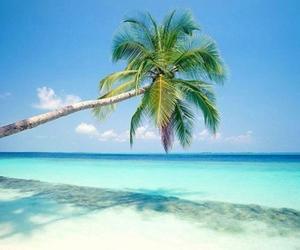 amazing, Dream, and paradise image