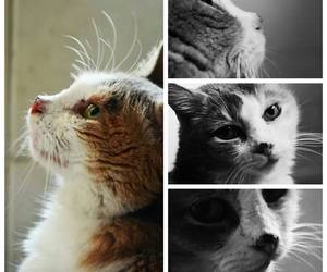 beautiful, love, and cat image