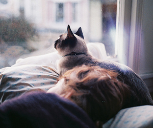 cat, cute, and window image