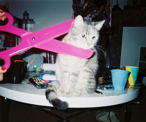 cat, pink, and indie image