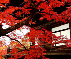 japan and tree image