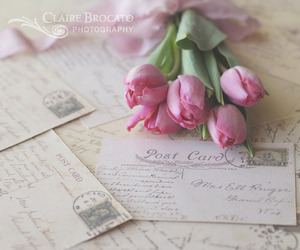 flowers, pink, and postcard image