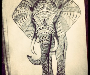 black&white, indie, and elephant image