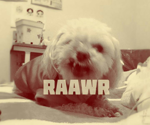 puppy, rawr, and song image