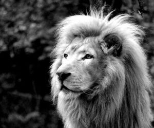 my lion and ☼♪0 image