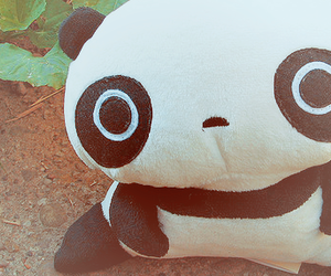 panda and tare panda image