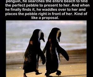 awww and penguin love image