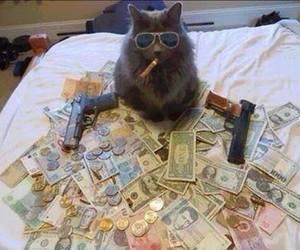 cat, money, and gun image