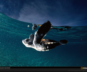 ocean, turtle, and animal image