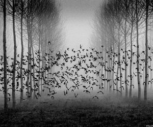 birds, black and white, and forest image