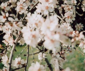 flowers, blossom, and nature image