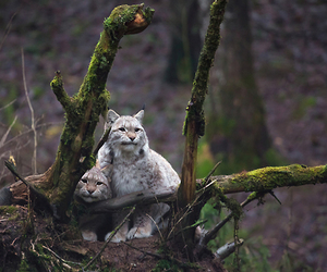animals, forest, and woods image