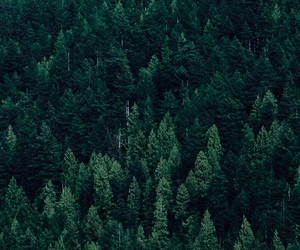 tree, forest, and green image