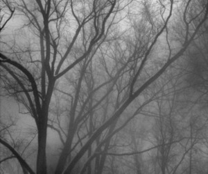 black and white, fog, and trees image