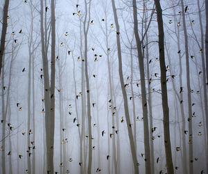 bird, tree, and forest image