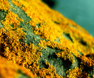 stone, yellow, and bryophyte image