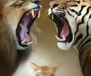 cat, lion, and tiger image