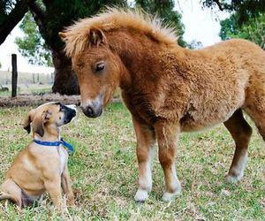animal, farm, and pony image
