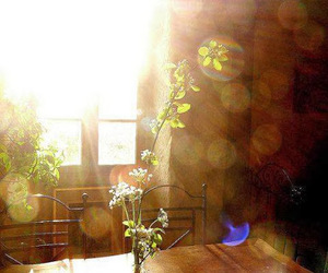 sun, flowers, and light image