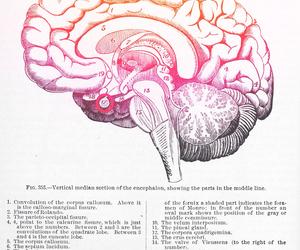 anatomy, art, and brain image
