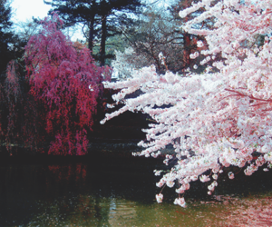 flowers, water, and trees image