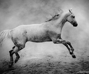 تفسير الخيول في الحلم النابلسي   رؤيا الفرس في المنام