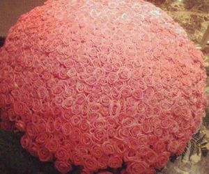 OMG, pink, and roses image