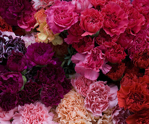 flowers, pink, and red image
