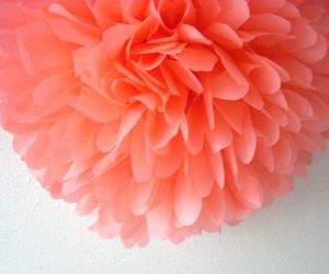flower and coral image