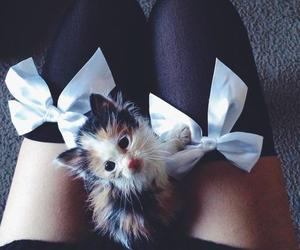 cat, bow, and kitten image