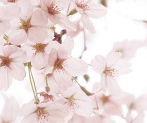 flowers, selena gomez, and justin biber image