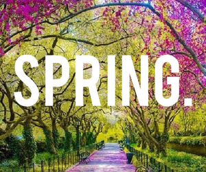 spring, love, and books image