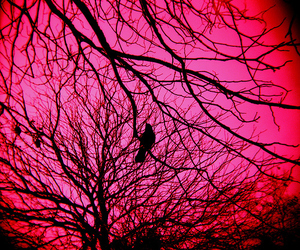 pink, bird, and branches image