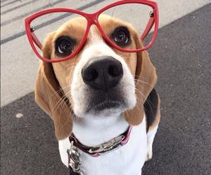 animals, dog, and glasses image