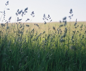 field, outside, and summer image