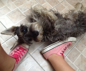 babe, he, and converse image