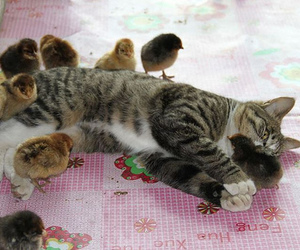 cat, cute, and Chick image
