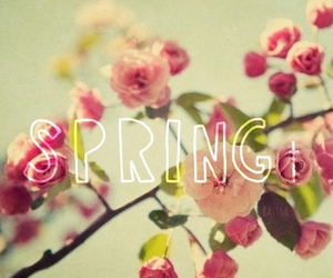 spring, beautiful, and flowers image