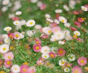 flowers, daisy, and march image