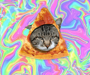 cat, pizza, and drugs image