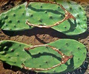 cactus, nopal, and mexico image