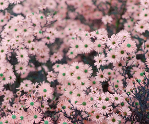 beautiful, flores, and pinks image