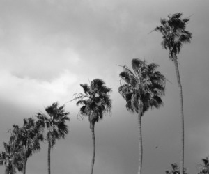 black and white, tree, and palm image