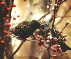 autumn, love, and birds image