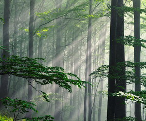 forest, sun, and rays image