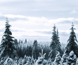+, nature, and snow image