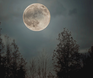 moon, night, and forest image