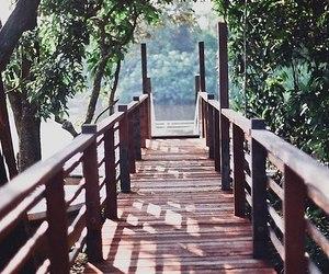 nature, bridge, and photography image