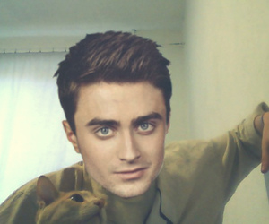cat, sexy, and daniel radcliffe image
