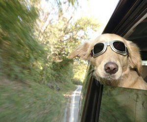 dog, car, and cool image